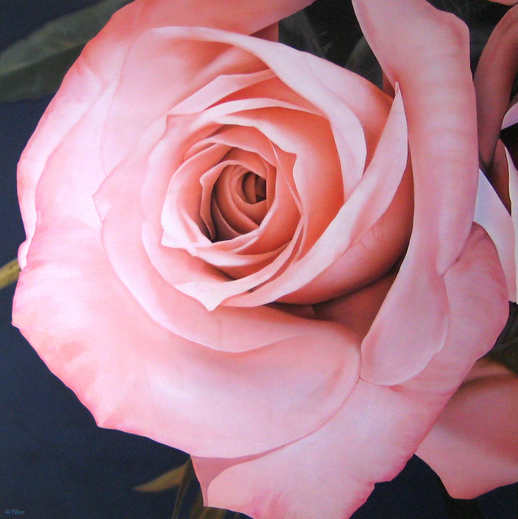big_pink_rose